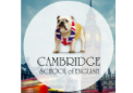 Kursy Cambridge School of English
